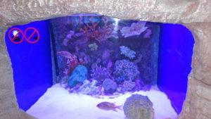 аквариум в анталии