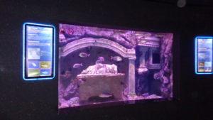 океанариум в анталии
